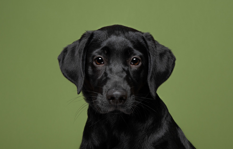 Commercial photographer for pet businesses in Marlborough