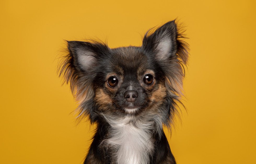 Commercial Imagery pet photographer in Wiltshire