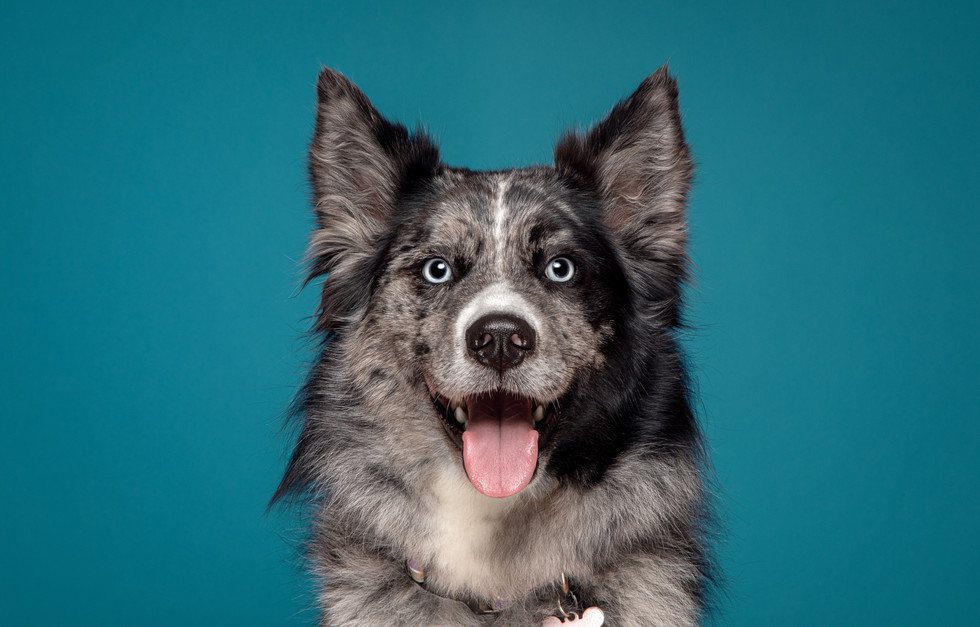 Commercial Imagery pet photographer in Swindon