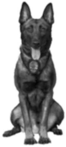 Paws4Law_byTPS-12 (transparent)_edited.p