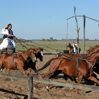 Puszta Tour With Horse Show
