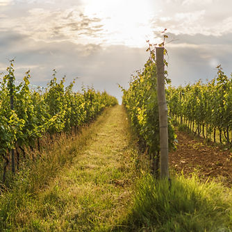 Eger Tour With Wine Tasting