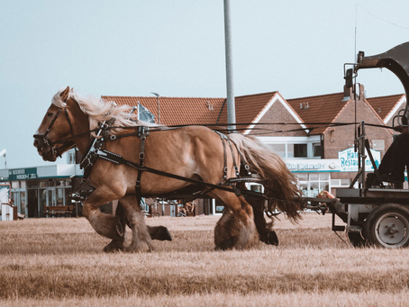 What the Amish can Teach us about Branding