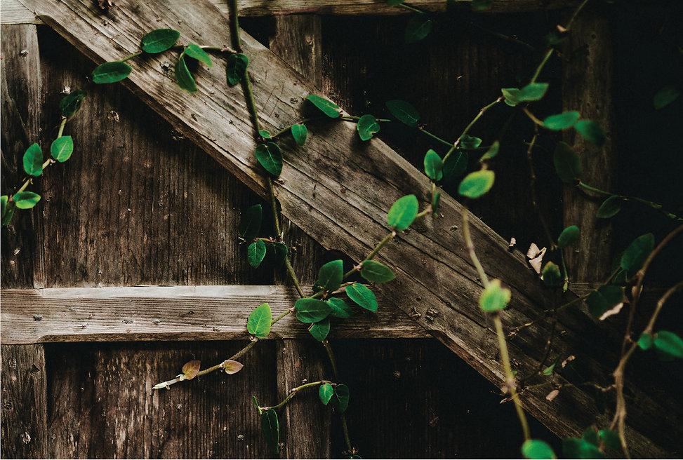 Bradbury-SecretGardensTour-Fence-01.jpg