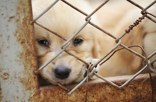 puppy-mill.jpg