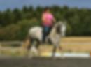 Hest i trening