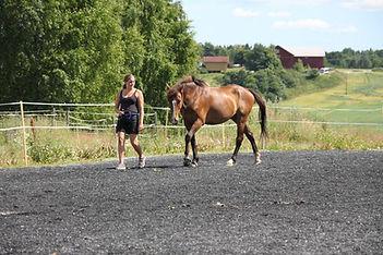kommunikasjon hest