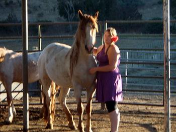 atferd hest