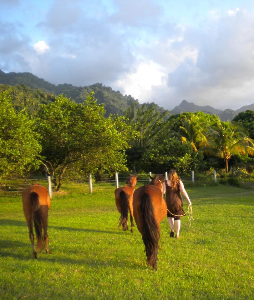 trening av hest