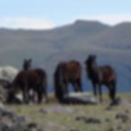 Foredrag på hest og helse sitt fagforum