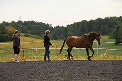 Undervisning i trening av hest
