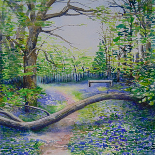 Shady bluebell wood with fallen trunk