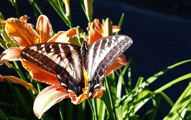 cransbill flowers | Cindy's Blog Link