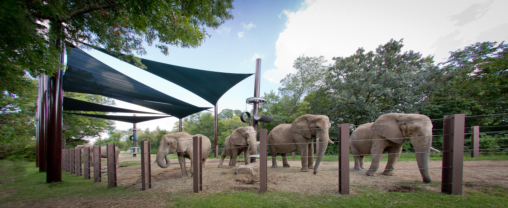 KC Zoo Elephant Shades