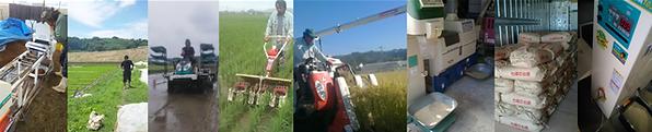 LP-米生産工程.PNG