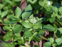 tiny-white-flower-2081070_1920.jpg