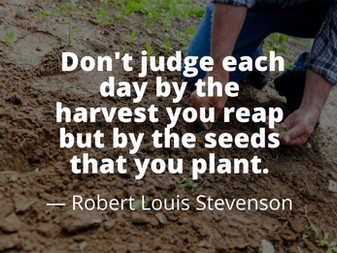 Sow These Five Seeds Every Day