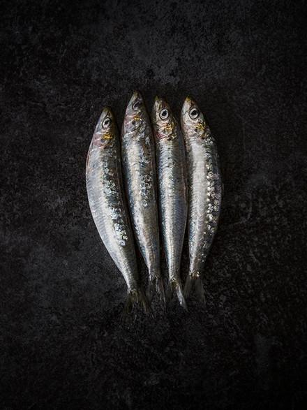 Photographie poisson - Photographie culinaire