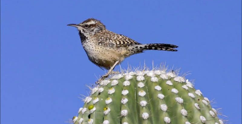 Catch Sight of Rare Wildlife with the Tucson Audubon Society