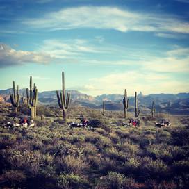 Sunset Desert Tours