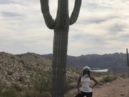 Huge Saguaro