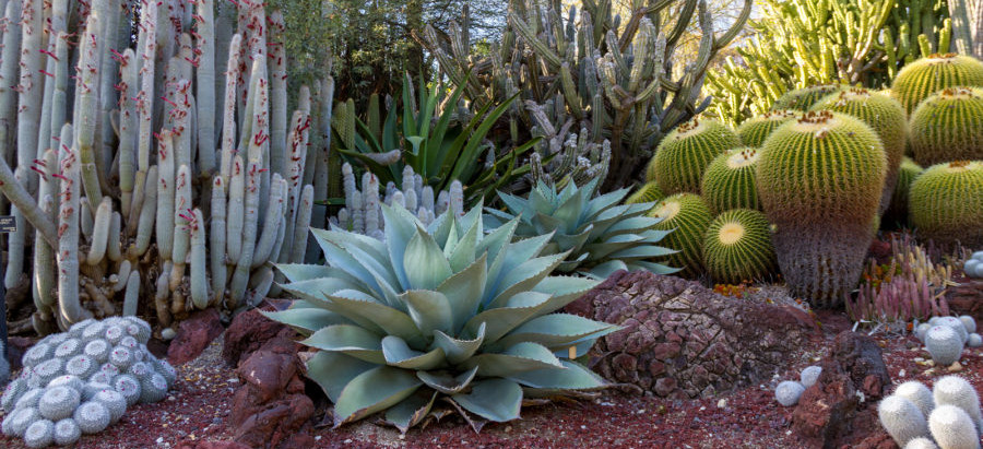 Why You Shouldn't Overlook the Phoenix Desert Botanical Garden