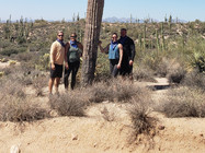 Picture Perfect Saguaro