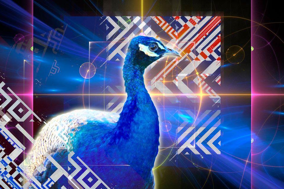 Peacock Pretty