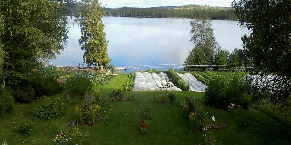 Bodsjö Prästgård - Land öppen trädgård