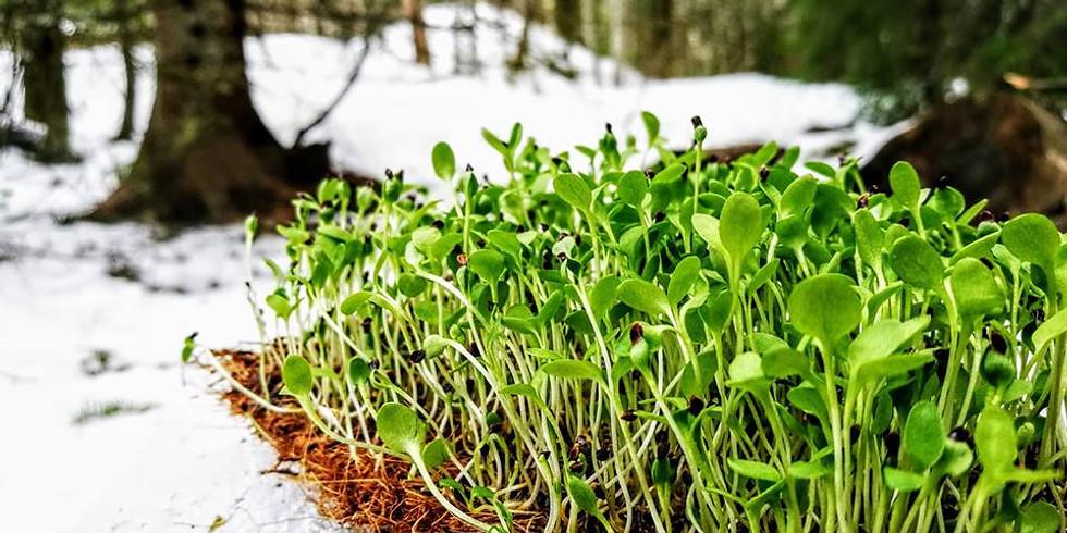 Mer om hydroponisk odling!