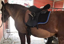 black saddle pad with navy and toffee trim