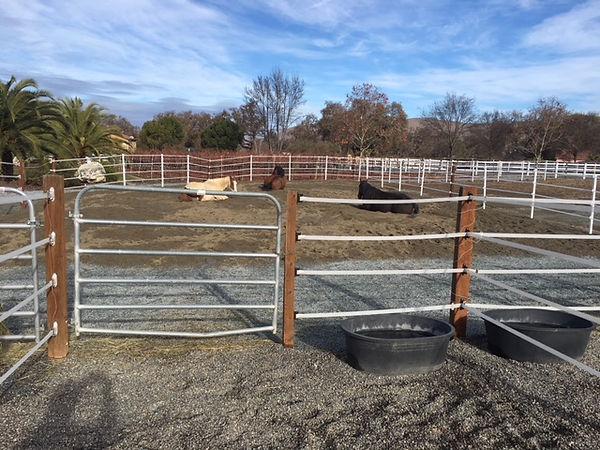 Horses enjoying new turnout