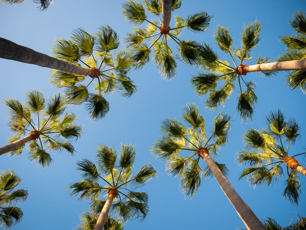 Marbella palmeras tropicales