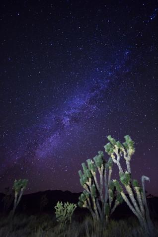 Joshua Tree Milky Way.jpg