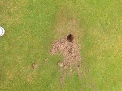 Crow holes