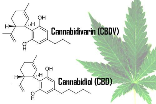 CANNABIDIOL CBDMEX.COM