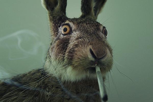 pal conejo cbdmex.com