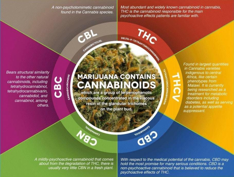 cannabinoides cbdmex.com