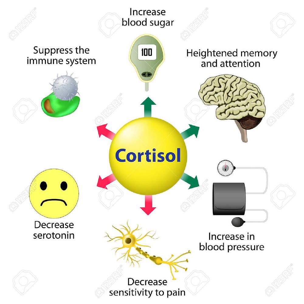 cortisol cbdmex.com