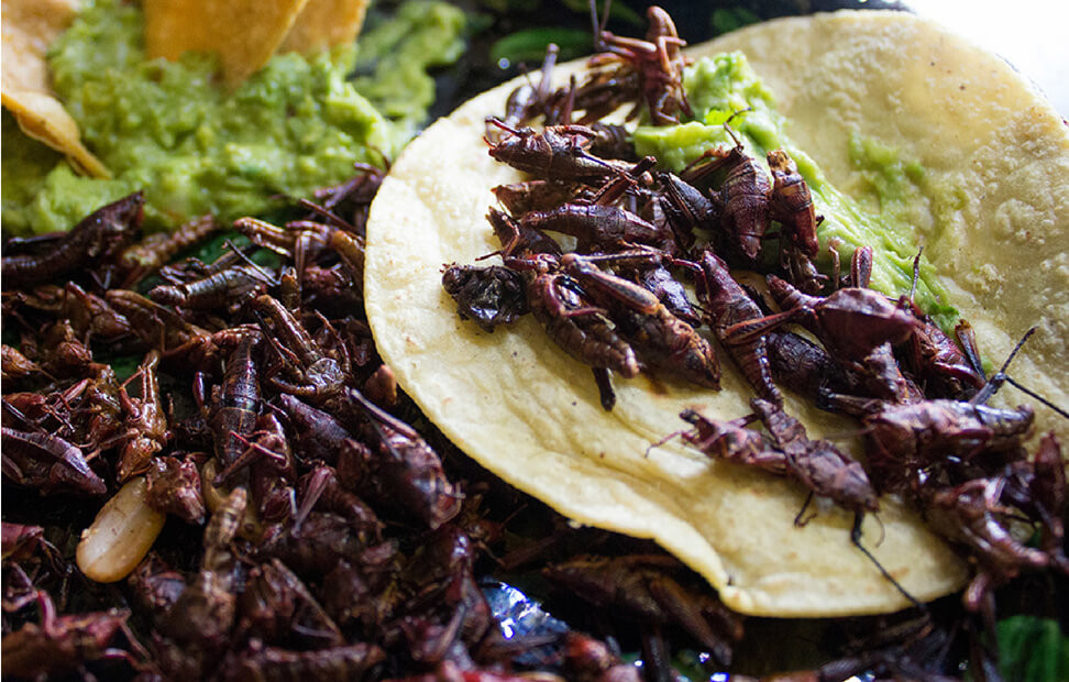 tacos de chapulin