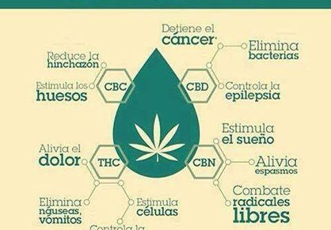benficios del cannabis cbdmex.com