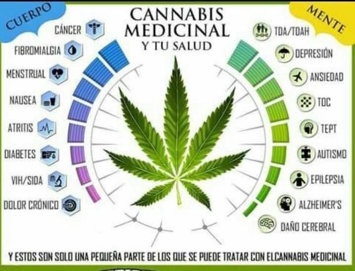 marihuana medicinal cbdmex.com