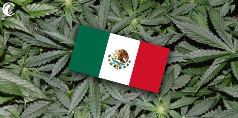 marihuana mexico cbdmex.com
