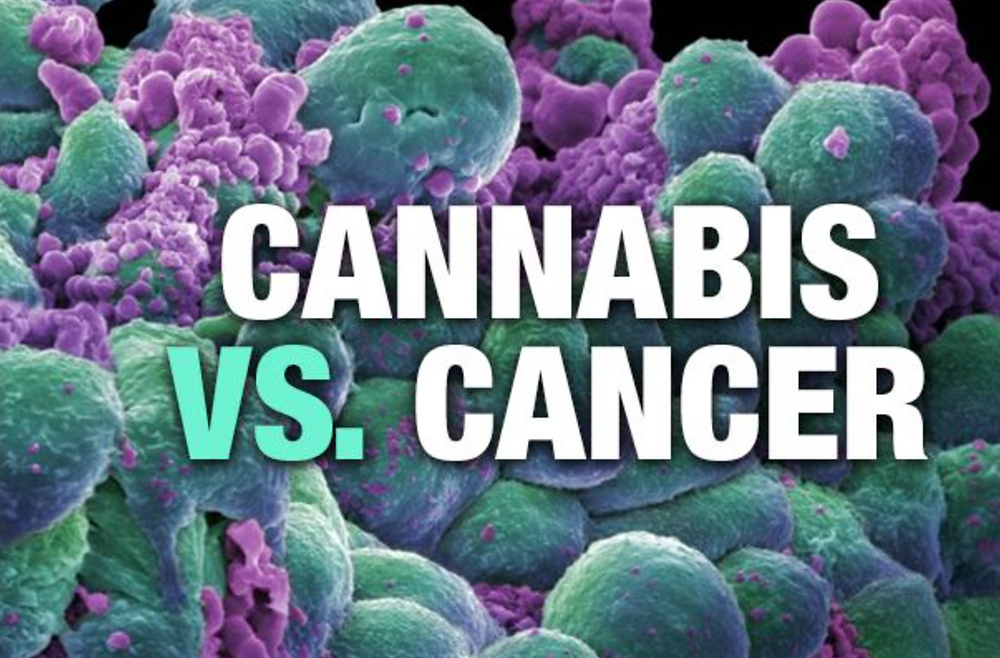 cancer contra cannabis