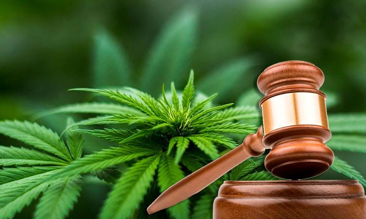 jurisprudencia marihuana cbdmex.com