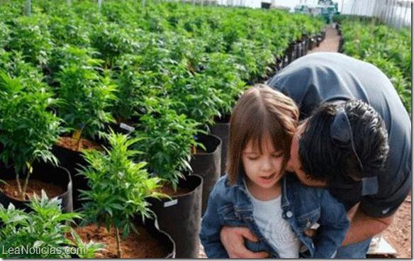 cannabis medicinal para niños cbdmex.com