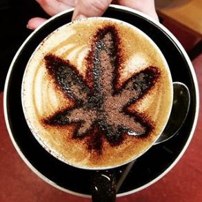 cannabis cafe cbdmex.com