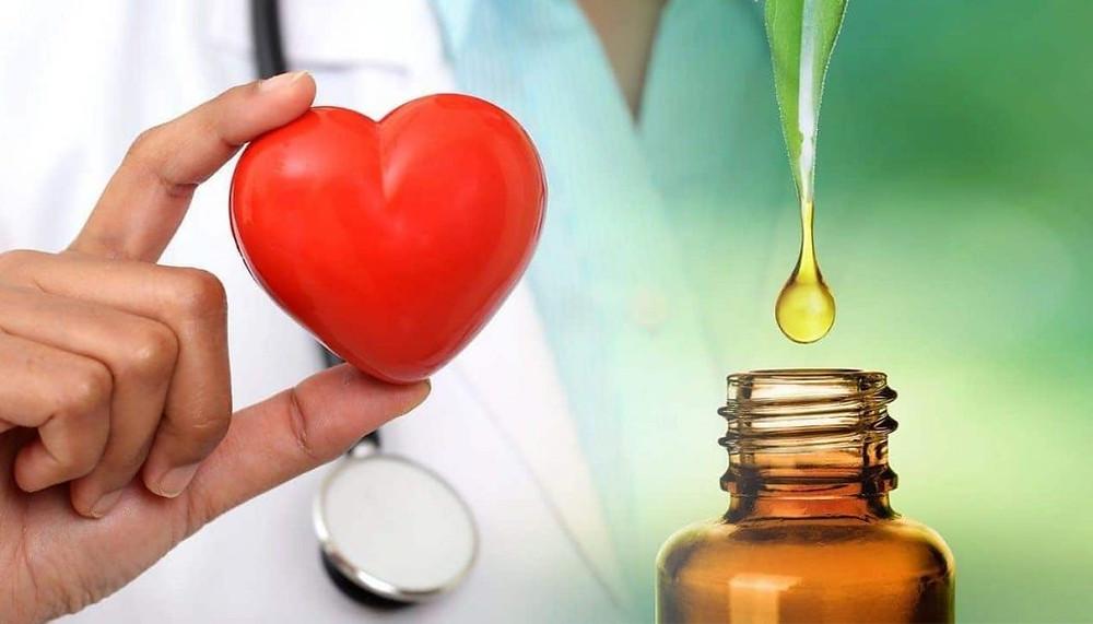 sistema cardiovascular y cbd cbdmex.com