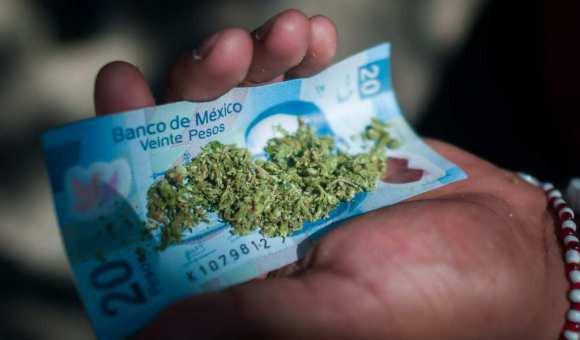 billete de 20 con marihuana cbdmex.com