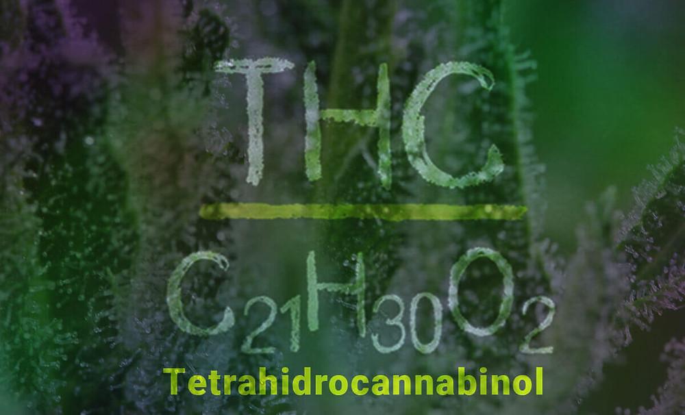thc cbdmex.com